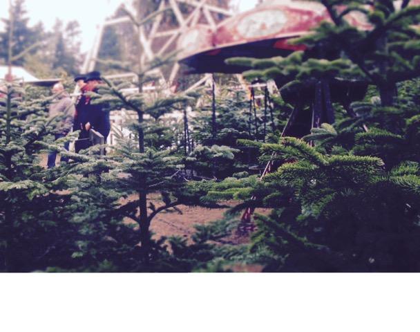 101 Christmas Trees