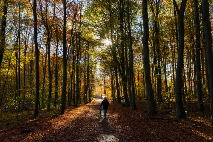 A guide to discovering Aarhus' natural scenery